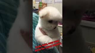 Не щенок а маленькое чудо!!!!!!😍😍😇😇🐶🐶🐶🐶🐶