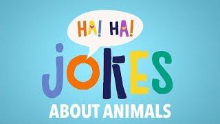 Jokes About Animals 🐼🦊🐱