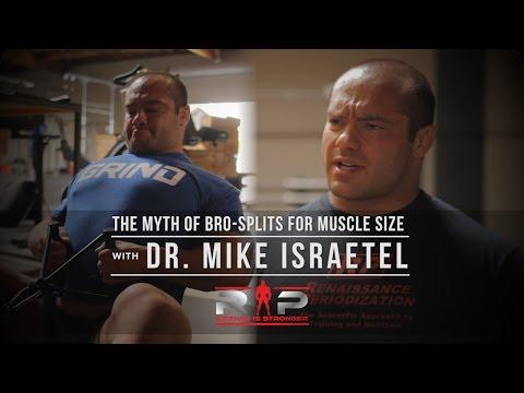 Les muscles fessiers la salle de musculation