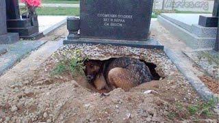Những Chú Chó Trung Thành Nhất Thế Giới