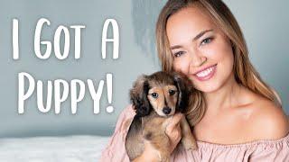 MY NEW PUPPY: Miniature Dachshund Puppy Haul