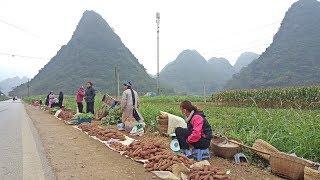 ลุยเวียดนาม(Vietnam) EP100:ตลาดข้างทางเผ่านุง(Những)  เว่าจาสำเนียงภาคใต้ไทย ภูเขางามหลาย