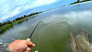 Рыбалка на кольцо сазана в августе