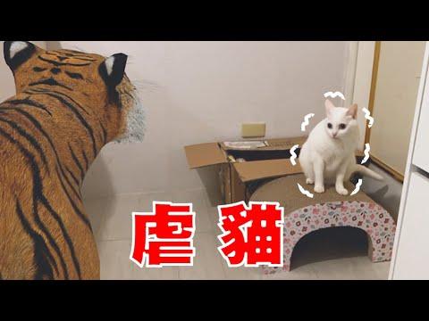 抓一隻老虎回家 貓咪的反應如何?