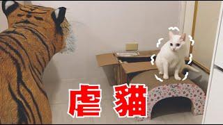 【豆漿 - SoybeanMilk】帶老虎回家 貓咪瑟瑟發抖