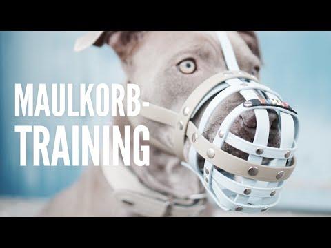 Maulkorbtraining - 5 Schritte für eine perfekte Maulkorbgewöhnung - Hundeerziehung by Vitomalia