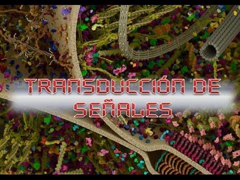 Transducción de Señales/Señalización celular