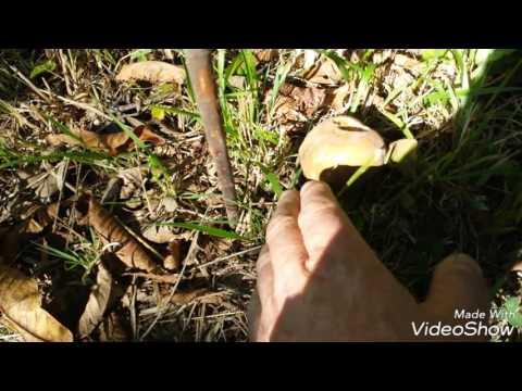 Mezzi da un fungo di parete
