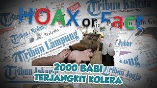 Hoax or Fact: 2.000 Ekor Ternak Babi di Sumut Terjangkit Hog Cholera?