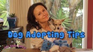 Dog Adopting Tips - Dog Gone Good