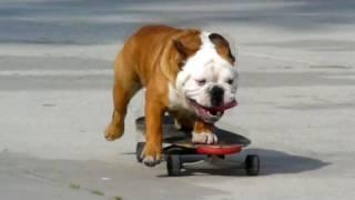 Gambar cover Skateboarding Dog - HD Redux