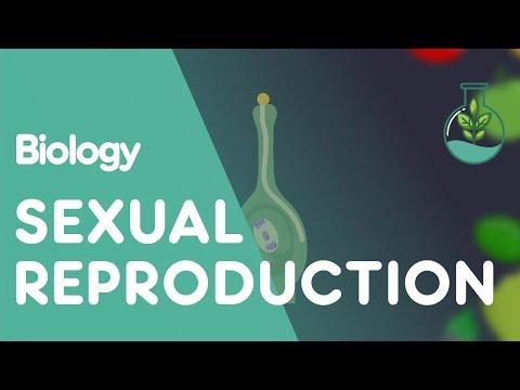 Sexo en las calles en línea