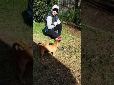 Yoshi 1st Encounter W/grass