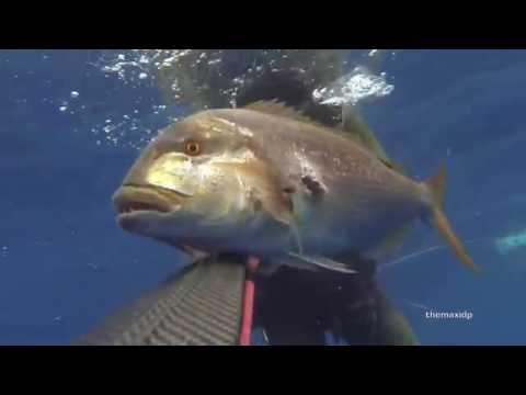 Norme di helminths nel pesce