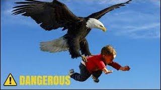Le Pouvoir Des Aigles - Les Aigles Vs Les Raids Chien, L'ours, Le Bébé, Le Lapin, Le Cerf,  Keng TV