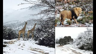 Snow in Africa - African Winter Wonderlands