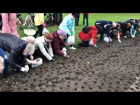 Wideo1: Akcja sadzenia żonkili w Europejski Dzień Walki z Rakiem Piersi