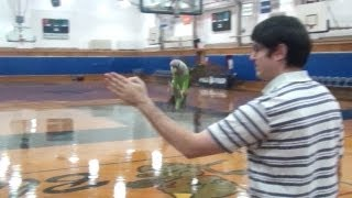 Parrots Flying in Gym Part 2 (also featuring Kili's newest trick!)