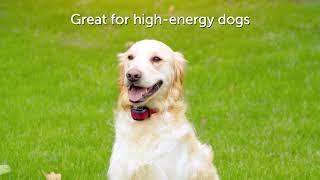 PetSafe How to choose between a PetSafe® Stubborn Dog collar or a PetSafe® Standard Dog collar Advert