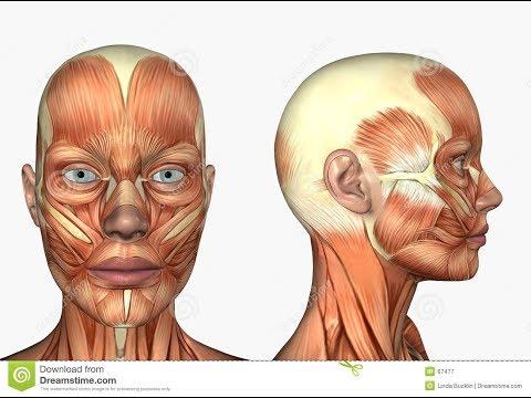 Dolore nelle articolazioni del bacino dellanca