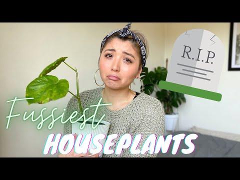, title : 'TOP FUSSY HOUSEPLANTS | PLANTS I'M KILLING