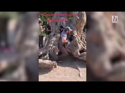 Այ էսպես, թեթեւի մեջ, կոտրեցին նաեւ Հաղարծինի «Երազանքների ծառը․ Նաիրա Զոհրաբյան - Հրապարակ