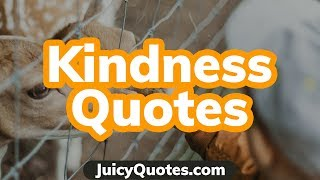 Top 15 Kindness Quotes And Sayings 2020 - (Results From Being Kind)