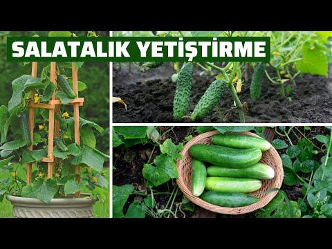 , title : 'Salatalık Nasıl Ekilir? Saksıda Salatalık Çimlendirme Yetiştirme Teknikleri