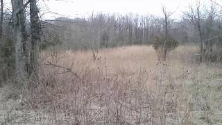 40 Seconds Of A Winter Meadow - Video Youtube