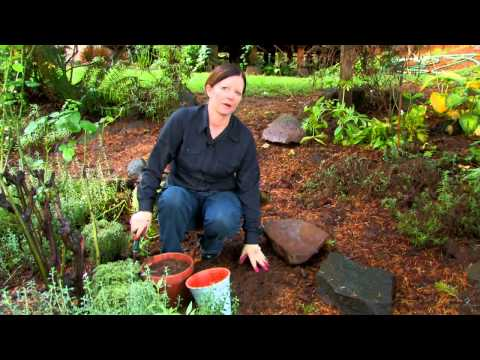 The Best Soil for an Herb Garden