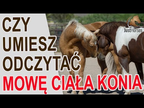 Kursk, gdzie można kupić konia patogenu