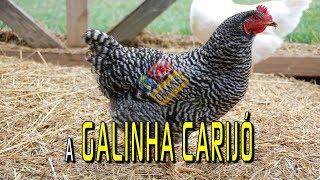 A galinha carijó - Ilustração do Reino de Deus com Pr. Juanribe Pagliarin