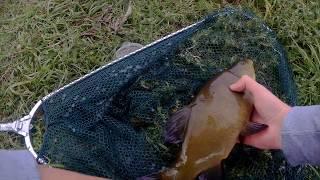 Рыбалка на линя в августе.Крупный линь на поплавок!