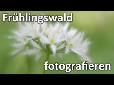 Landschaftsfotografie: FRÜHLINGS-WALD +Makro +Mehrfachbelichtung