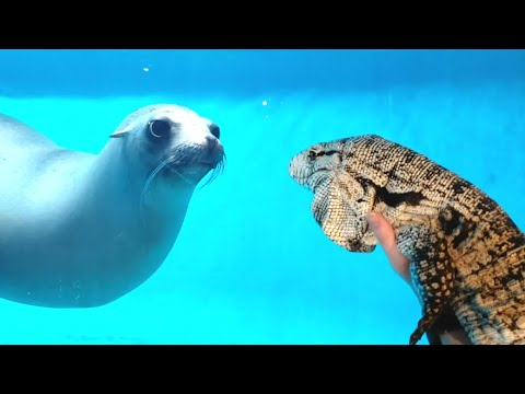 Seal Sees A Lizard For The First Time