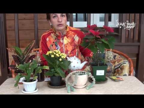 Чем подкормить растения осенью и зимой