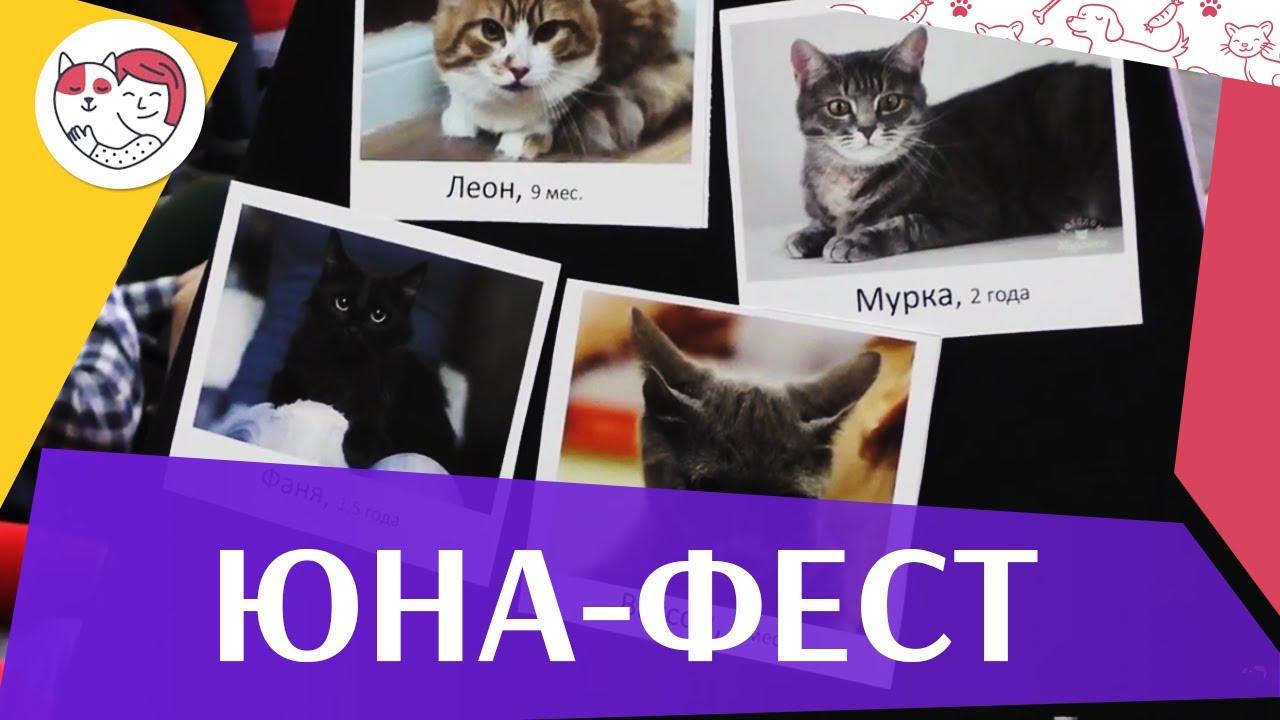 Выставка-пристройство животных «Юна-фест» на ilikpet