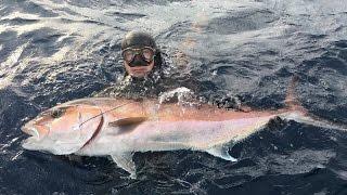 Spearfishing Croatia - The Best Of 2016.