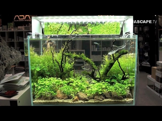 Planted aquariums of Heimtiermesse 2015, Hannover - part 1