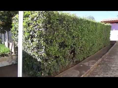 Muro vivo - Muro verde - Minas Gerais