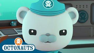 Octonauts - Captain's Super Adventures | Cartoons for Kids | Underwater Sea Education