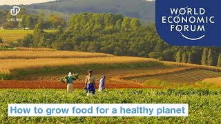 4 ways to grow food that keep our planet healthy | World Economic Forum