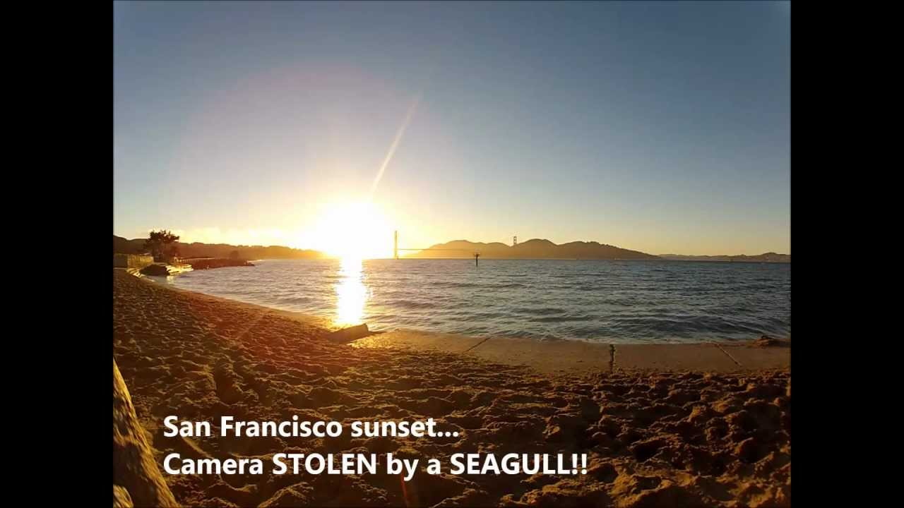 Seagulls Love Stealing GoPro Cameras And Flying Away