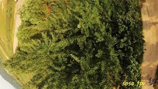 [Gopro7_DJI FPV]BGM_Lizzo - Juice (Lyrics) / drone / fpv / freestyle