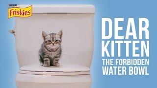 Dear Kitten: The Forbidden Water Bowl