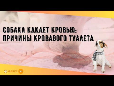 Собака какает кровью: причины кровавого туалета