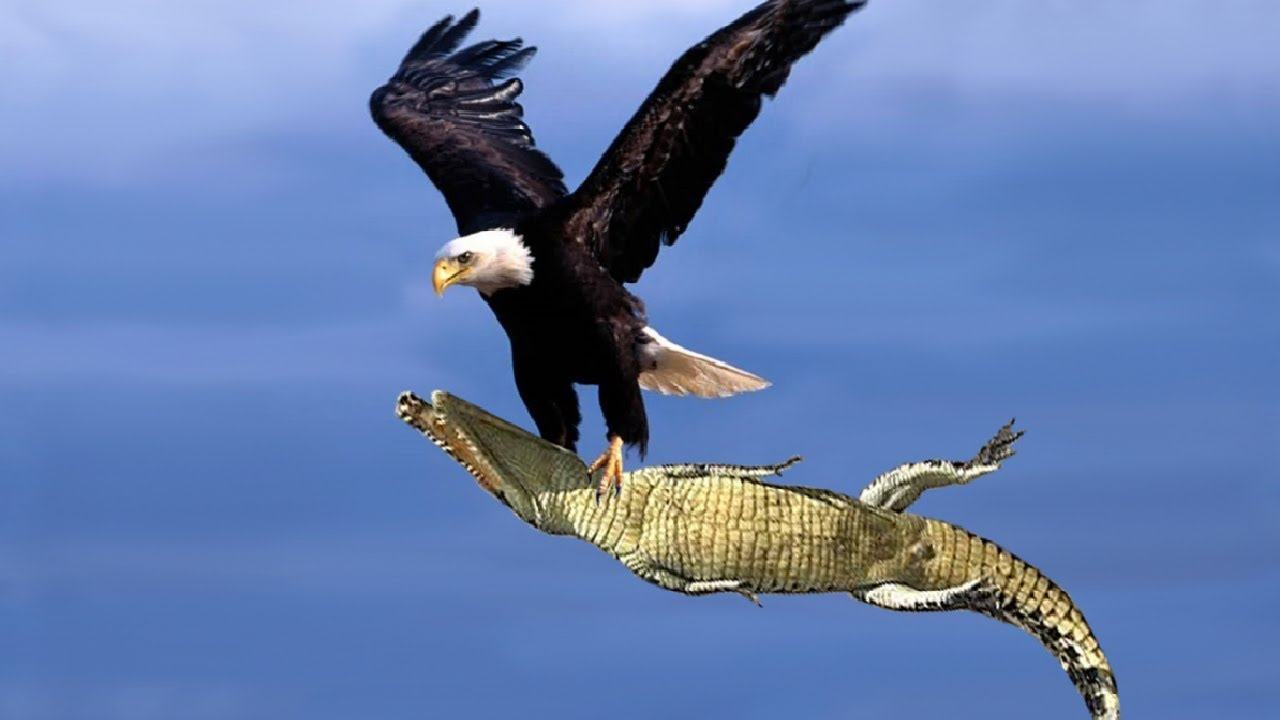 INOpets.com Anything for Pets Parents & Their Pets The Best Of Eagle Attacks Most Amazing Moments