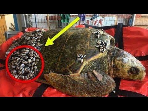 inflamația articulară într o broască țestoasă maini si picioare umflate