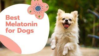 Best Melatonin for Dogs