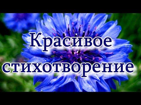 """Красивое стихотворение """"Я простой василек.."""" Ирины Самариной-Лабиринт ПОСЛУШАЙТЕ!"""